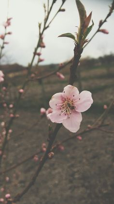 #pink #flower #spring Spring, Flowers, Plants, Garden, Garten, Planters, Royal Icing Flowers, Gardening, Outdoor
