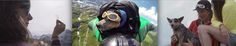 When_Dogs_Fly_Worlds_First_Wingsuit_BASE_Jumping_Dog_2014_header