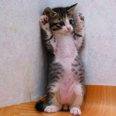 #cute, #cat