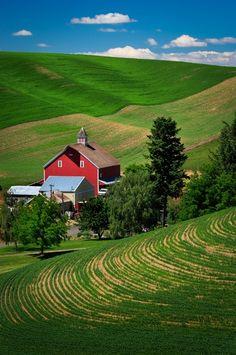 Red Barn & Field