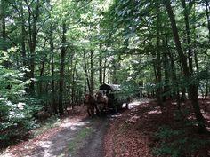https://flic.kr/p/KvGNFQ | Planwagenfahrt durch die hessischen Wälder