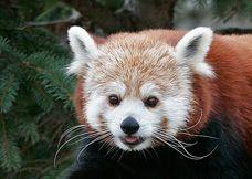 Syracuse, NY  Rosamund Gifford Zoo