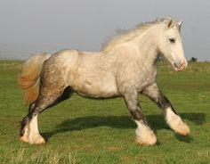 chevaux a moi