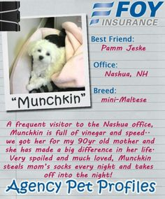 Munchkin joins our Agency Pet Profiles!
