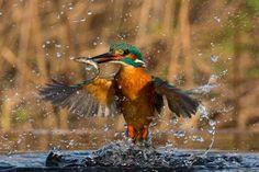 11 de las mejores fotografías de animales que verás en todo el año