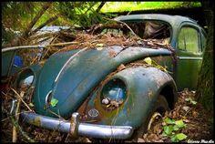 VW - Never Dies