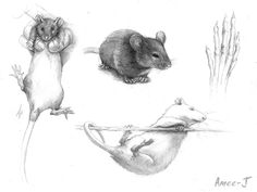 Rats by Amee-J.deviantart.com on @DeviantArt