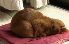 I caught our cat Uma sleeping like this tonight.  Except, this pic is from Japan.  The cat looks just like ours!