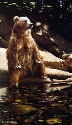 Wildlife art prints reproduced from artist Collin Bogle's original wildlife paintings. Hand signed open and limited edition giclées printed on quality archival paper or canvas. Animals include bears, birds, big cats, wolves and more! Animals And Pets, Baby Animals, Funny Animals, Cute Animals, Baby Pandas, Wild Animals, Wildlife Paintings, Wildlife Art, Bear Pictures