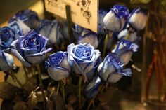 blue roses? for reals?