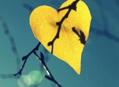 Yellow heart | Hearts in nature | Yellow and Blue