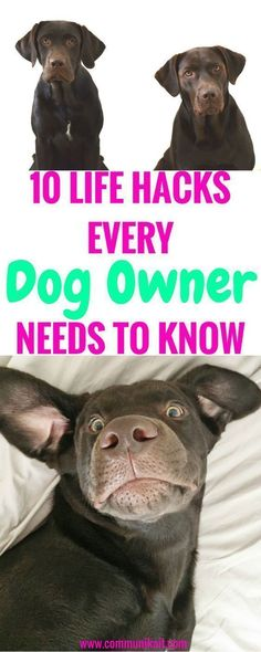 10 Life Hacks For Dog Owners - Tips For Pets - Puppy Tips - Life Hacks For Dogs - Puppy Tips - Dog Care - Communikait by Kait Hanson - Chocolate Labrador #doglifehacks #dogtips #doghacks