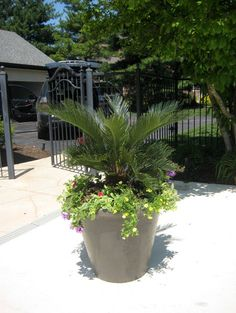 Tropical Patio Flower Pots And Planters Design, Pictures, Remodel, Decor  And Ideas