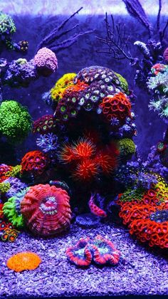 Saltwater Aquarium Fish - Find incredible deals on Saltwater Aquarium Fish and Saltwater Aquarium Fish accessories. Let us show you how to save money on Saltwater Aquarium Fish NOW! Aquarium Marin, Coral Reef Aquarium, Marine Aquarium, Aquarium Fish, Coral Reefs, Coral Reef Art, Saltwater Aquarium Beginner, Saltwater Fish Tanks, Beautiful Sea Creatures