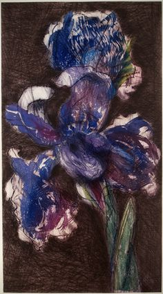 William Kentridge (South African, b. Dutch Iris Etching and aquatint in 17 colours, sheet- x 80 cm. Gouache Color, Dutch Iris, Parts Of A Flower, South African Artists, Art Academy, Flowers Perennials, Contemporary Artists, Art Inspo, Drawings