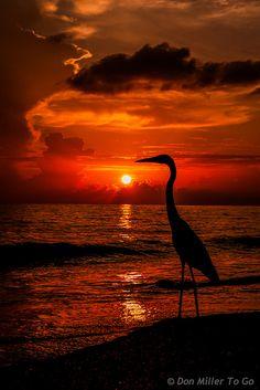 My Florida | Flickr - Photo Sharing!