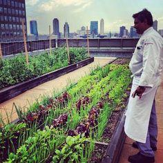 chef gardens--North End Grill farm