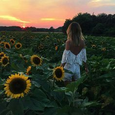 The Hamptons, New York in July I'll never forget walking barefoot through this sunflower field at sunset with dirt under my bare feet, and seeing fireflies light up the trees for the first. Senior Pictures, Cute Pictures, Sunflower Photography, Mode Hippie, Sunflower Pictures, Sunflower Fields, Foto Pose, Senior Girls, Photo Instagram