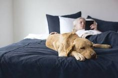 Go ahead and share the bed with your dog-we've got it covered. Our lightest dog-proof bedding ever, designed to stay in place to protect your bedding from dirt, pet hair and moisture, but not weigh you down when it comes to washing. This reversible coverlet has a sturdy polyester corduroy weave on one side and a water-resistant coating in camel on the other side. Matching shams are all corduroy with envelope-style opening on back. Shams sold separately. Coverlet has camel on reverse…