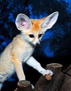Cute little Foxy