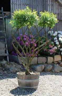 New Ideas Garden Design French Topiaries Garden Paths, Garden Art, Garden Landscaping, Garden Design, Lotus Garden, Dream Garden, Plant Wallpaper, Living Fence, Unique Trees