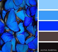 #alinababina #alinababinacolors #royalblue