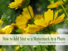 """Want to let people know just WHERE those FAB Foto's you took came from? Great EASY info on """"How to add text to a photo (including a semi-transparent background)"""""""