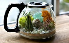 kaffe-terrarium
