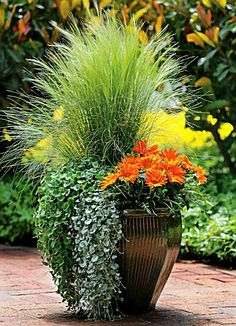 Container Gardening Ideas Orange Surprise, by Ball Horticultural Container Size: 14 inches, Exposure: Sun New Day™ Clear Orange gazania Emerald Falls dichondra Silver Falls™ dichondra Pony Tails Mexican feather grass Fall Planters, Garden Planters, Flower Planters, Large Garden Pots, Succulent Planters, Balcony Garden, Succulents Garden, Container Flowers, Container Plants
