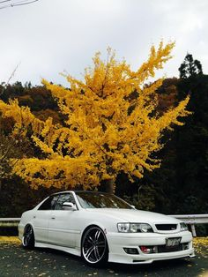 Is it Autumn yet?