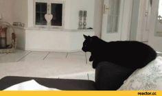 Animated Cat Animals Giff #92310 - Funny Cat Giffs Funny Giffs Cat Giffs