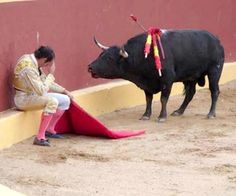 "FALSE: ""The moment Álvaro Múnera became an opponent of bullfights"". Claim: ""An Incredible Photo Marks The End of Matador Torero Álvaro Múnera's Career. He collapsed in remorse mid-fight when he realized he was having to prompt this otherwise gentle beast to fight. He went on to become an avid opponent of bullfights. Even grievously wounded by picadors, the bull did not attack."" The truth: He is anti-fighting, but this isn't why. It also isn't a remorseful pose; it's showy defiance."