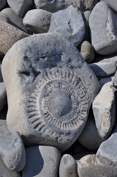 Ammonite fossil (probably from Lyme Regis area) Sticks And Stones, Beautiful Rocks, Ammonite, Devon, Rocks And Gems, Prehistory, Rocks And Minerals, Stones And Crystals, Shells