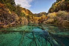 Paisagem do Lago das Cinco Flores, no Vale do Rize, na Reserva Natural e Parque Nacional do Vale de Jiuzhaigou, na província de Sichuan, República Popular da China. O lago multi-colorido é raso e o fundo é cruzado por velhos troncos de árvore caídos, em sua parte inferior. O Vale Rize possui 18 km de comprimento e é o ramo sul-ocidental de Jiuzhaigou.  Fotografia: Chensiyuan.
