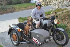 Dog in a sidecar Ural Motorcycle, Motorcycle Design, Bmw Motorcycles, Vintage Motorcycles, Bike With Sidecar, Side Car, Bmw Scrambler, Moped Scooter, Girl And Dog