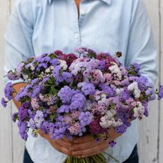 Timeless Mix - Ageratum Seed | Johnny's Selected Seeds All Flowers, Colorful Flowers, Dried Flowers, Wedding Flowers, Annual Flowers, Cut Flower Garden, Flower Farm, Flower Gardening, Diy Flower