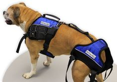 The Walkin' Lift Combo Harness provides complete lifting assistance and mobility support for a dog's chest, shoulder and rear legs. Diy Dog Wheelchair, Paralyzed Dog, Dog Illnesses, Disabled Dog, Adaptive Sports, Medication For Dogs, I Cord, Old Dogs, Dog Harness