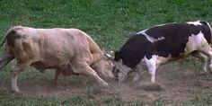 lucha animales fotos - Buscar con Google