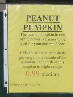 Peanut Pumpkins - so ugly, their cute!