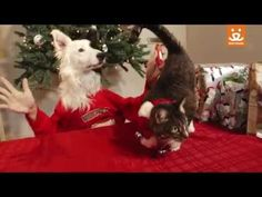 """They're baaack! From ugly sweaters and whipped cream to mistletoe and martinis, celebrate the holidays with the Best Friends """"holi-dogs."""""""