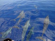 les dauphins hotel IKOTEL Ifaty Mangily MADAGASCAR www.ikotel-tulear.com