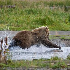 How to Photograph Wildlife Action Shots | PhotoNaturalist