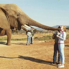 Have you ever been #kissed by an #elephant? @jasmine_michella has.  #elephantkiss #elephantadventure #experience #africa #livenow #makeeverydaycount #bewild #nature #instagood #instapic #instalike #instadaily #loveanimals