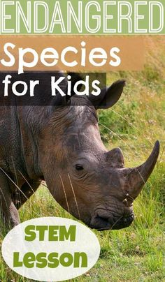 Endangered Species for Kids - Stem activities, endangered animal facts, and conservation efforts. Endangered Animals Lessons, Extinct Animals, Animal Activities For Kids, Animals For Kids, Stem Activities, Africa Activities For Kids, Classroom Activities, Physical Activities, Animal Science