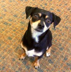 Dog Health News™ - Dementia in Dogs