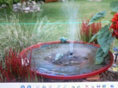 This is an old satalite dish my Dad gave me and I made a bird bath out of it!! They flock to it!!