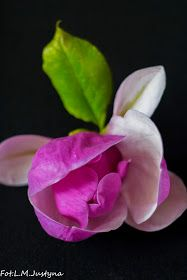 pretty in pink Amazing Flowers, Fresh Flowers, Pretty In Pink, Beautiful Flowers, Coming Up Roses, Rose Buds, Floral Arrangements, Bloom, Regine