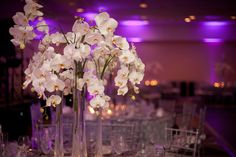 Orchid Centerpiece | photography by http://www.ligaphotography.com/