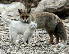 Beautiful companionship