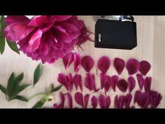 Живой пион. Разбор (реверс). - YouTube Real Flowers, Youtube, Youtubers, Youtube Movies